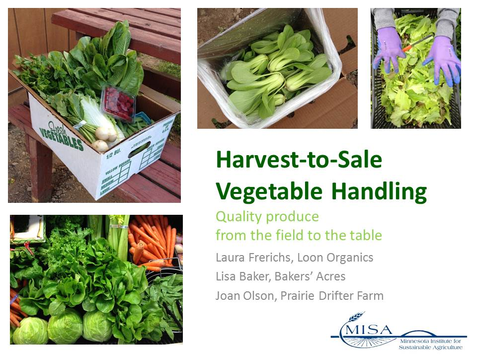 cover image for Harvest to Sale Vegetable Handling